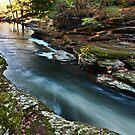 Downstream Shine by Marty Straub