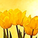 Yellow Tulips by Marty Straub
