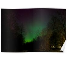 Auroras in the Woods Poster