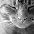 The Life of a Cat - Black and white by petegrev