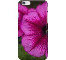Red petunia flower Leith Park 201511020539  iPhone Case/Skin