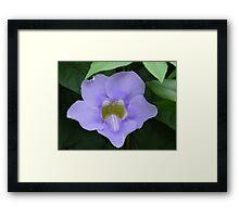 Mean Flower Framed Print