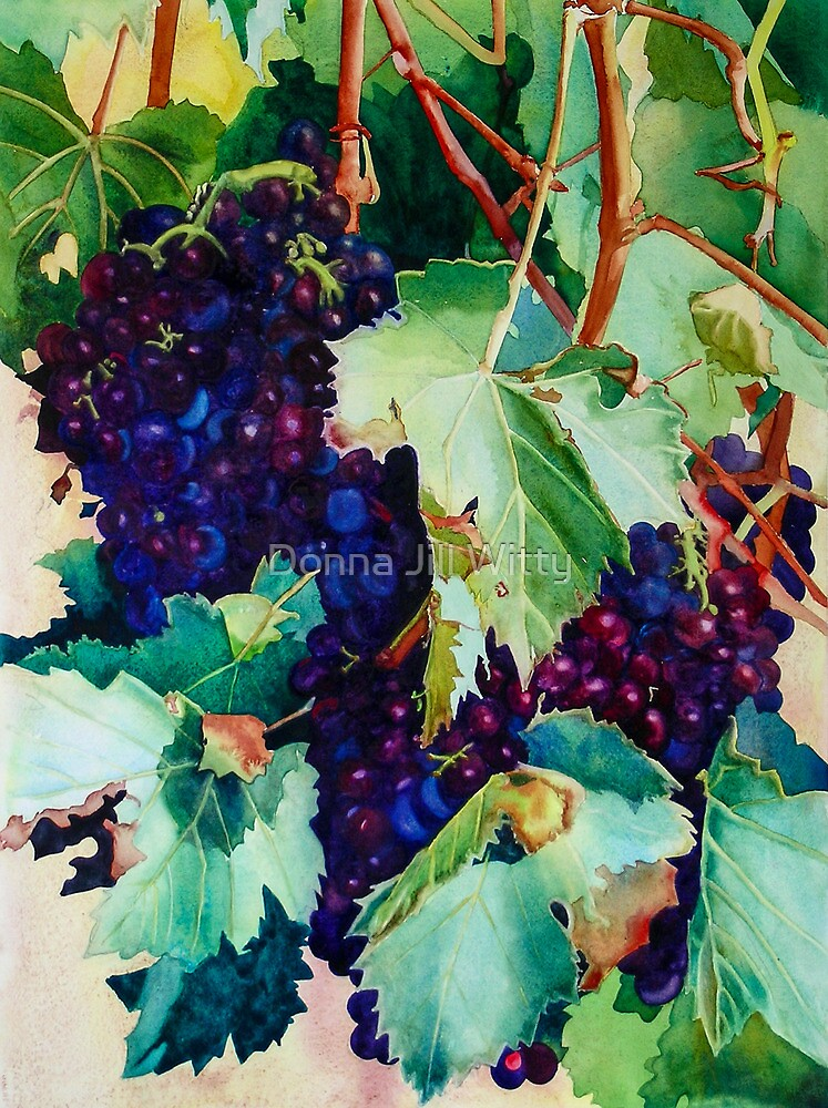 Sangiovese by Donna Jill Witty
