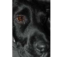 Scooby Photographic Print