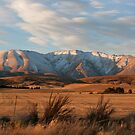 Central Otago by Jill Ferry