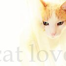 Cat Love... by LindaR