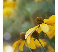 Golden flowers Photographic Print