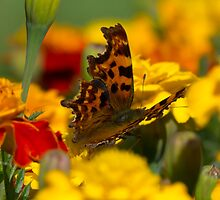 A Camouflage of Beauty by Michael Gray