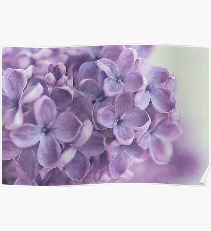 Lilac Poster