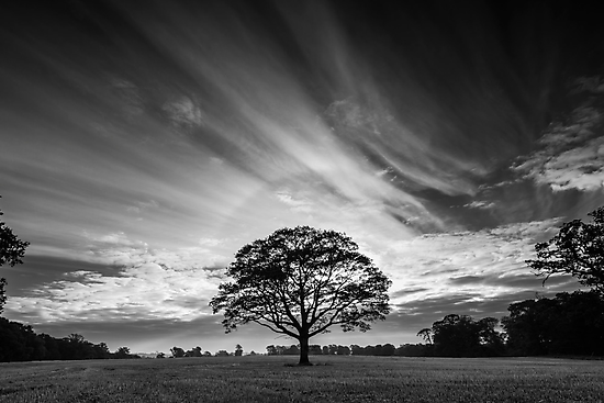 Tree of Life by Nigel Bryan