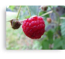Ripe raspberry Canvas Print