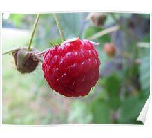 Ripe raspberry Poster