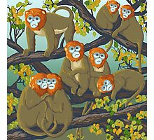 Monkeys Photographic Print