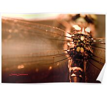 Dragonfly by Laura Lawrence Poster