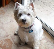 Is there a Westie translator in the house? by MarianBendeth