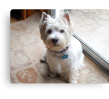 Is there a Westie translator in the house? Canvas Print