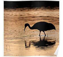Sandhill Crane Sunset Reflection Poster
