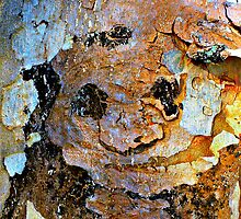 Face On A Tree by tropicalsamuelv