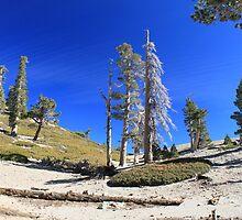 Mt. San Antonio Peak by Rosalee Lustig