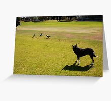 Three Magpies And Jesse The Dog In A Stand Off Greeting Card