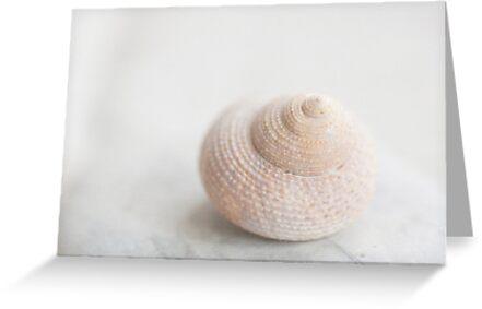 Shell by Jill Ferry