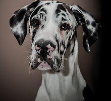Great Dane puppy by chris-kemp
