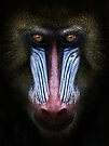 Mandrill by SD Smart