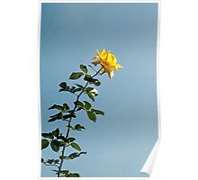 Yellow Rose Poster