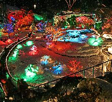 BUTCHART Gardens : Winter Wonderland by AnnDixon