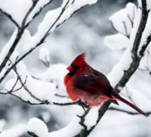 Cardinal In Snow Covered Tree Sticker