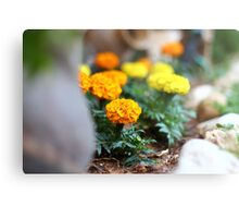 Colourful Day  Metal Print