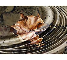 Jazzy Leaf in Muddy Waters Photographic Print