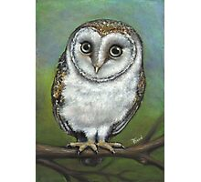 An Owl Friend Photographic Print