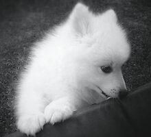 Puppy by Filipkos