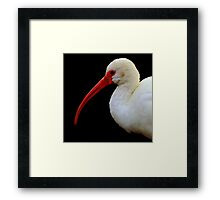 The Beautiful World Of The Flying Wonders ~ Part Six Framed Print