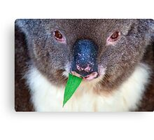 Chewing Gum Canvas Print