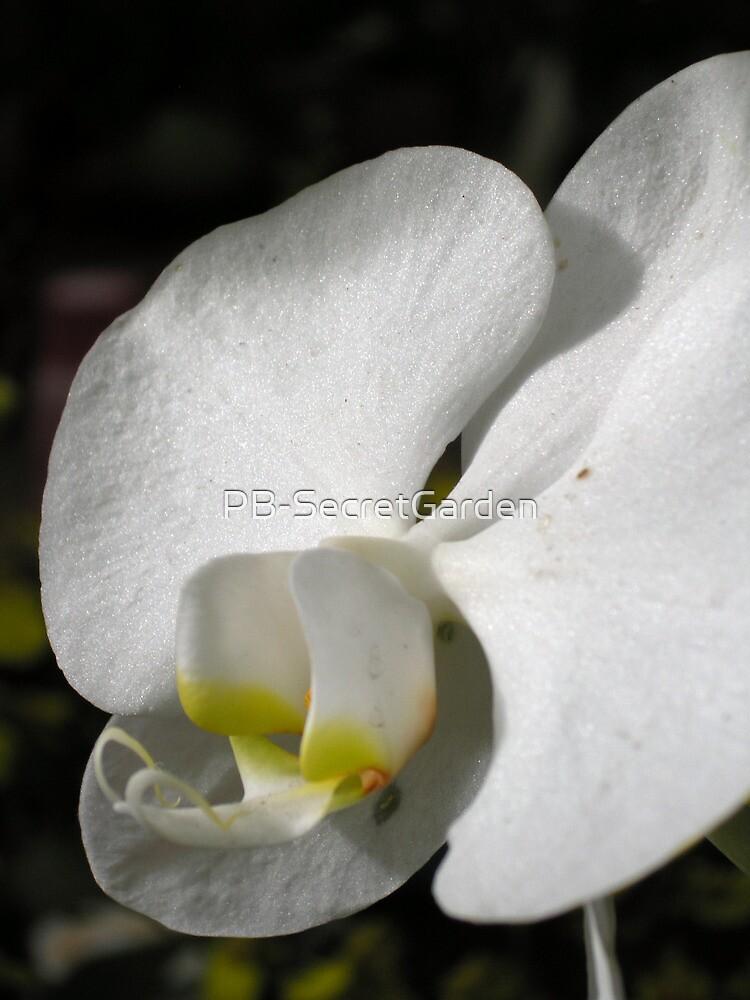 Orchid #4 by PB-SecretGarden