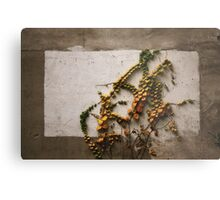 Autumn didn't want to be framed.......  Metal Print