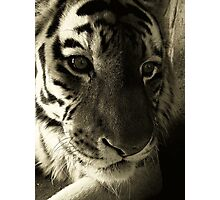 I feel this life is so unfair..Fight while your alive, fight till I die!!! Photographic Print