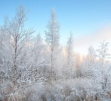 Frozen December by Ari Salmela