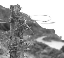 Post & Wire fence by rennaisance
