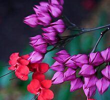 Floral Remedy by Adam Bykowski