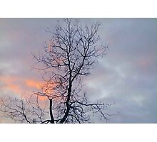 Lonely Tree in the Sunrise Clouds Photographic Print