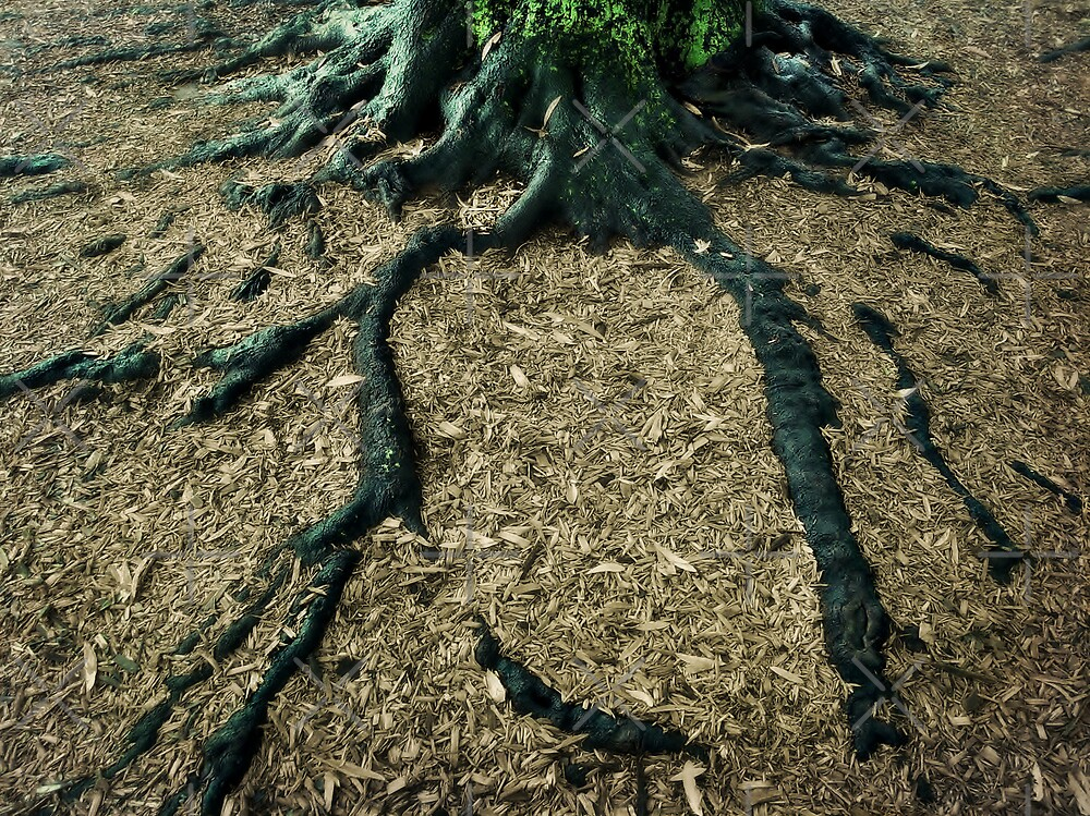 Roots to Branches by Scott Mitchell
