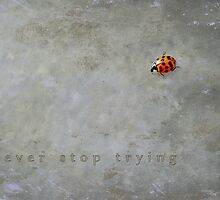 Never stop trying by Scott Mitchell