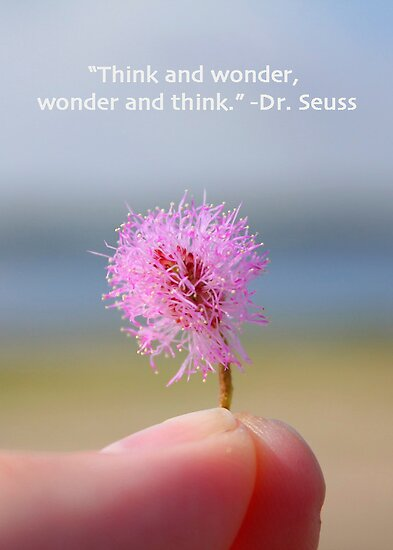 Think and Wonder by Ashley  Langtry