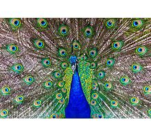Beautiful Peacock Photographic Print