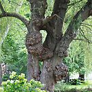The tree with many growths by Penny Rinker