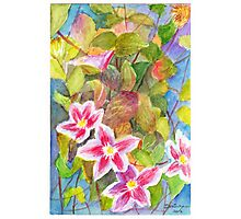 Clematis flower on the vine Photographic Print