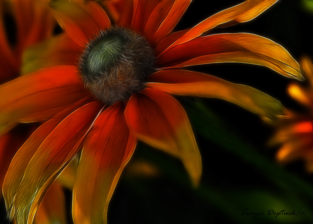 Candycorn Burst by Tracy Deptuck